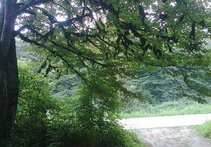 یافتن دو گمشده در جنگل های علی آبادکتول