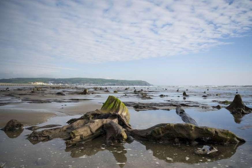 توفان هانا باعث بیرون آمدن یک جنگل ۴۵۰۰ ساله از زیر آب شد