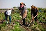 باشگاه خبرنگاران -بیش از ۹۰۰ شغل در روستاهای سبزوار ایجاد شده است