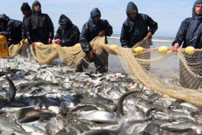 روابط //صید ۱۵ هزار و ۸۰۰ تن صید ماهی استخوان/ ۳۵ درصد صید ماهی استخوانی غیر مجاز است