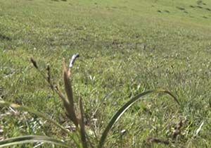 روح رویش در مراتع مهاباد + فیلم