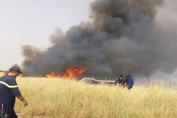 باشگاه خبرنگاران -داعش محصولات کشاورزی روستای حفتغار در کرکوک عراق را به آتش کشید