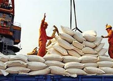 ممنوعیت واردات برنج در فصل برداشت برنج برداشته شد