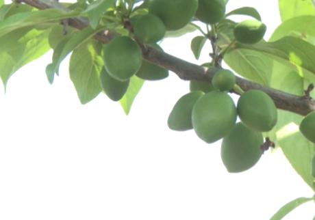 گلستان شدن بازار با میوههای گلستانی + فیلم