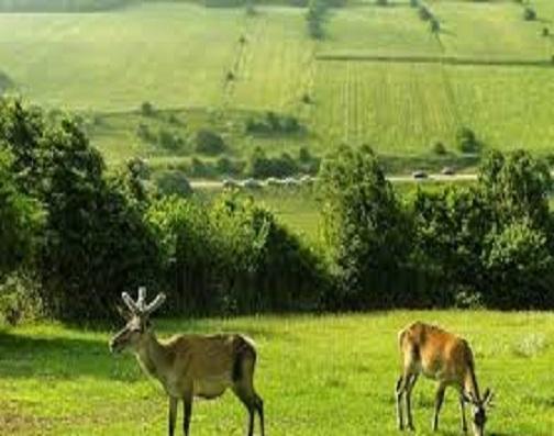 «فندقلو» میراث دار طبیعت کهن اردبیل؛ گردشگران به دنبال رمز گشایی سحر جنگل