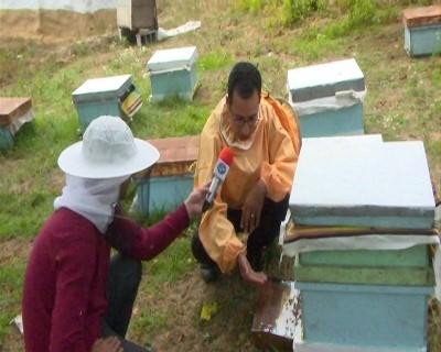 پیش بینی افزایش ۱۰ درصدی برداشت عسل در گیلان