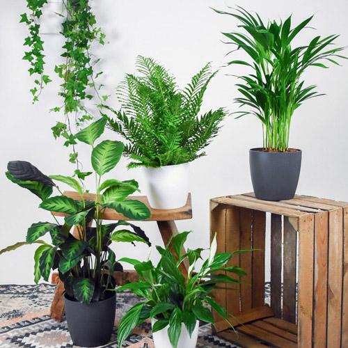خانمها؛ این گیاهان مخصوص شماست!
