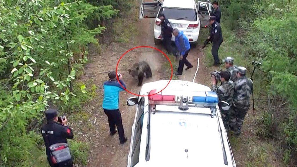 لحظه حمله خرس به ماموران پلیس + فیلم///