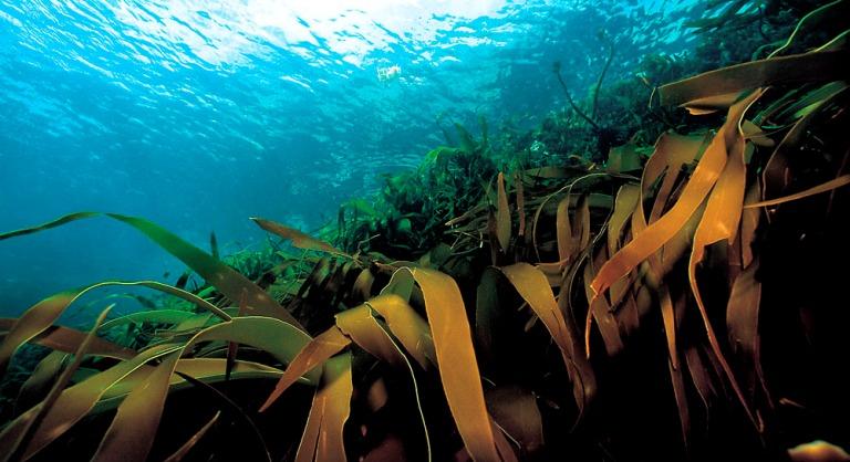 بانک اطلاعات زیستفناوری دریا راهاندازی میشود
