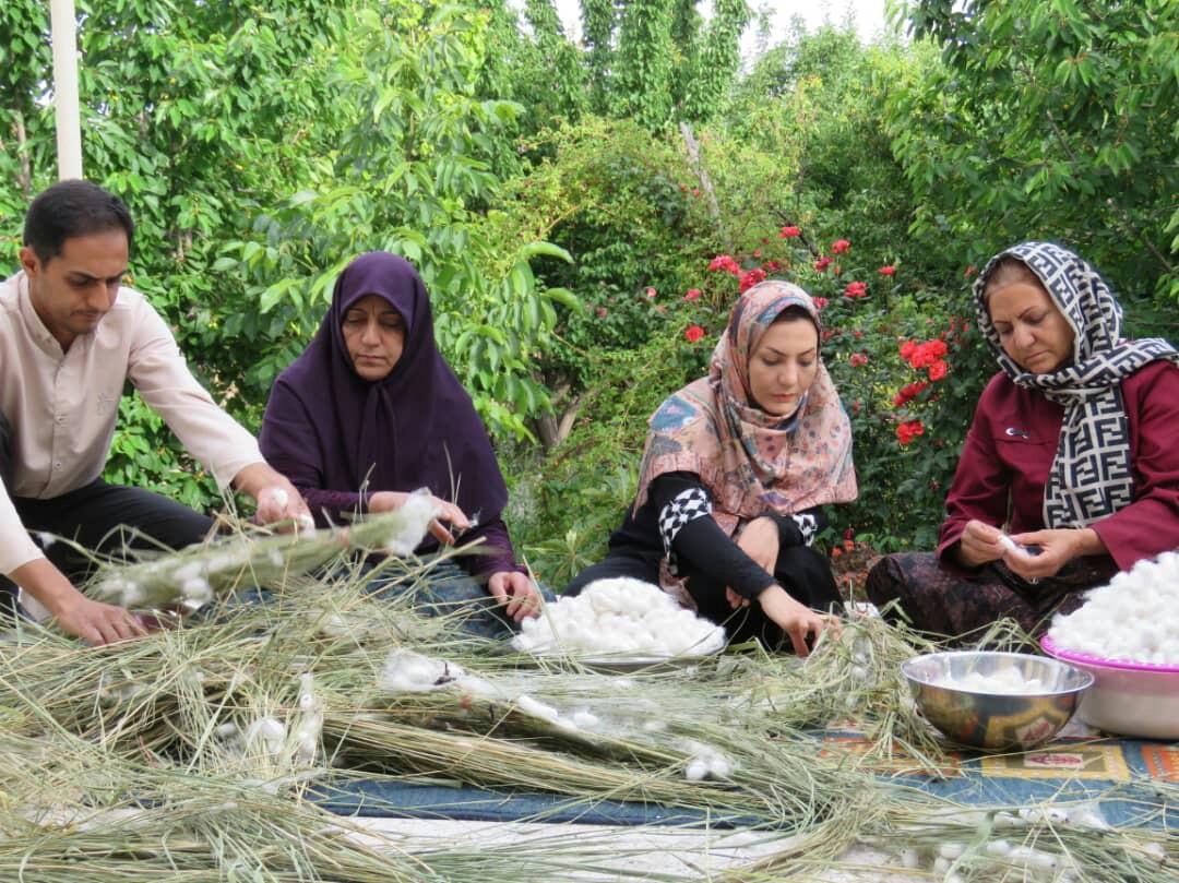 پیلههای پردرآمد در رابر کرمان