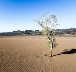 اجرای عملیات بیابانزدایی در ۶۰۰ هکتار از اراضی همدان