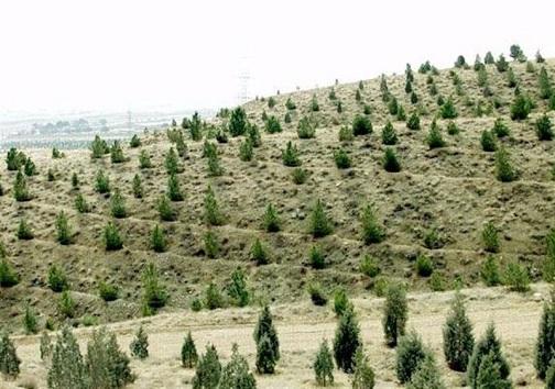 ریزگردهایی که نای نفسها را بریده است/شناسایی ۱۶ کانون اصلی گرد و غبار در استان
