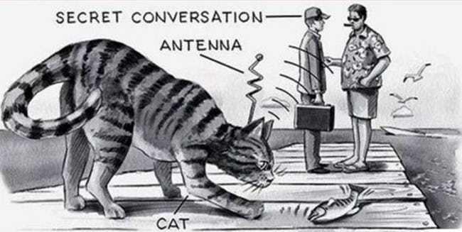 حیواناتی که برای سیا جاسوسی میکنند! / عملیات گربه شنوا چیست؟