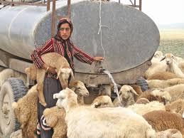 پلاسهای گرم و عطش عشایر استان کرمان