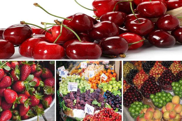 پیش بینی کاهش نرخ میوه های تابستانه در بازار/ کمبودی در عرضه میوههای باغی وجود ندارد