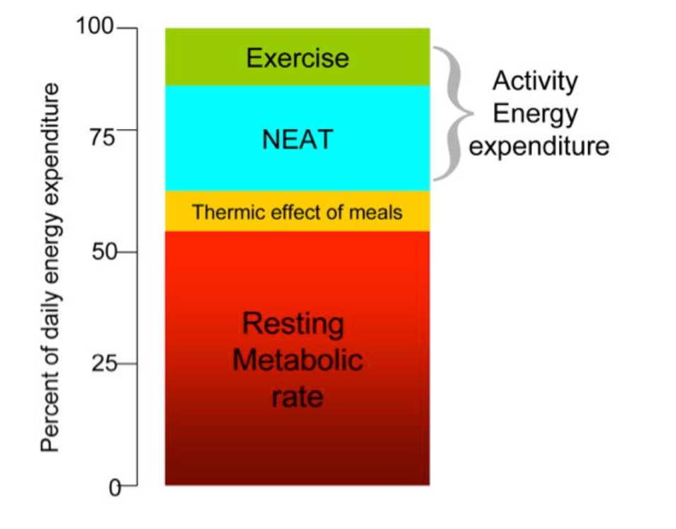 افزایش متابولیسم برای کاهش وزن راحتتر