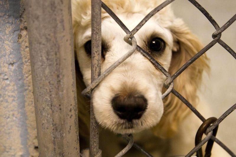 لایحه حمایت از حیوانات به کجا رسید؟