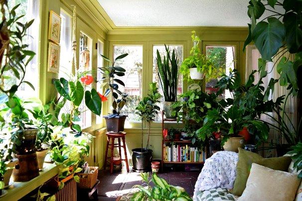 ۱۱ راهکار طلایی برای نگهداری از گل و گیاه در تابستان