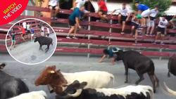 زنده ماندن باورنکردنی پسر جوان پس از حمله گاوها! +فیلم