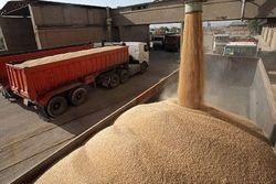 کشف بیش از ۲۵ تن گندم قاچاق در زنجان
