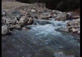 باشگاه خبرنگاران -نمایی از طبیعت تابستانی در روستای بوژان + فیلم