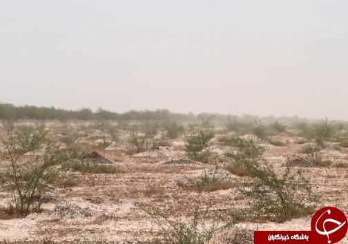 نهالکاری کانونهای گردوغبار خوزستان