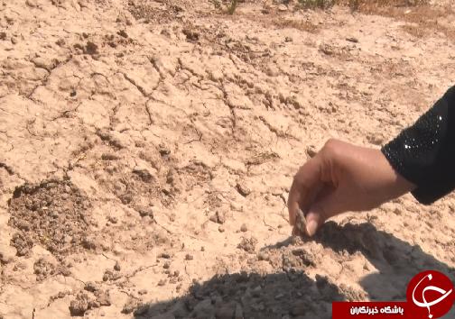 نهالکاری، مرهمی بر کانونهای گردوغبار خوزستان/تامین آب و اعتبار، مهمترین دغدغه ادامه عملیات