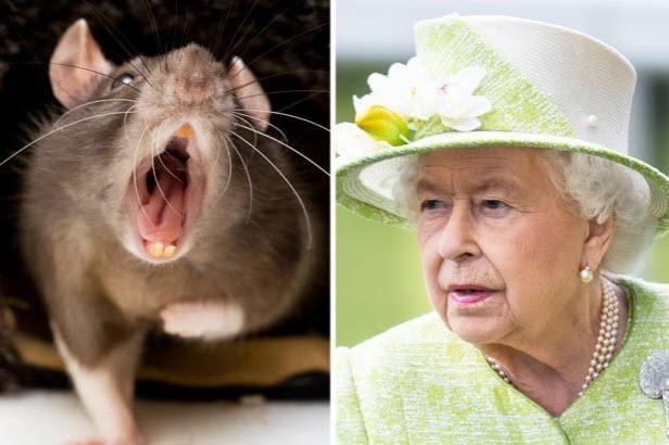 فرار ملکه الیزابت از دست موش ها+فیلم
