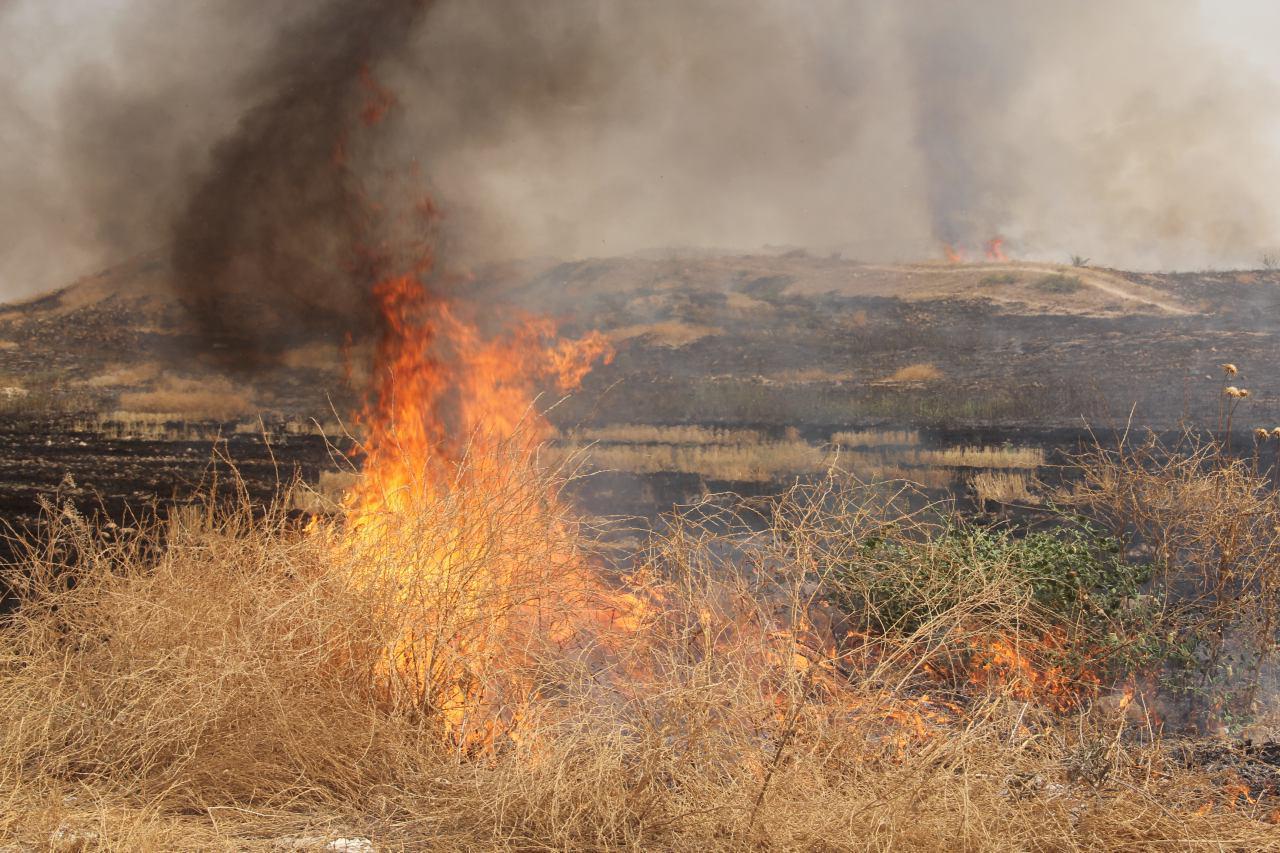 ۴هکتار از مزارع روستای محمود آباد ایلام در آتش سوخت