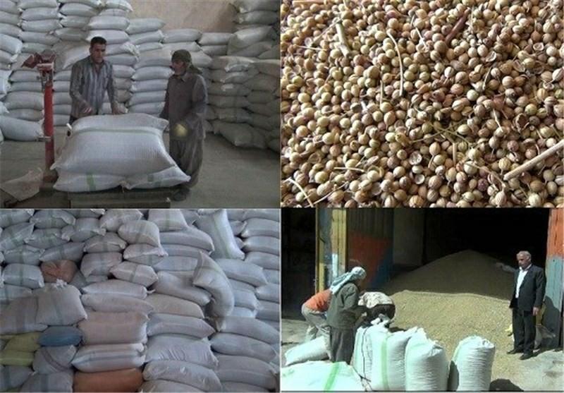 صادرات گیشنیز نهاوند به کشورهای حاشیه خلیج فارس/کشت۶۵ درصد گشنیز تولیدی کشور در نهاوند