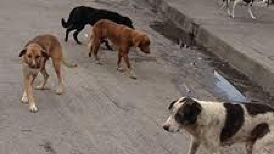 مرگ کودک ۲ ساله در پی حمله سگها