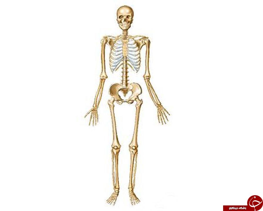 اطلاعاتی که شاید درباره استخوان هایتان نیاز شود/ وزن اسکلت انسان چقدر است؟