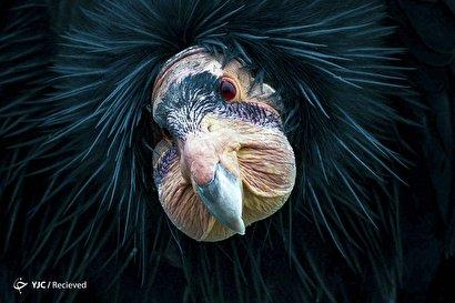 جوایز عکاسی اودوبان Audubon