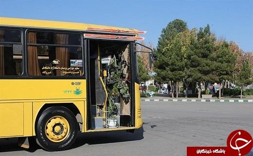 حرکت اتوبوس سبز در خیابانهای قم /راننده خوش ذوق قمی اتوبوس خود را به گلخانه تبدیل کرد