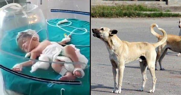 نجات باورنکردنی نوزاد توسط سگ های ولگرد! + فیلم///سه شنبه صبح
