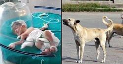 نجات باورنکردنی نوزاد توسط سگ های ولگرد! + فیلم