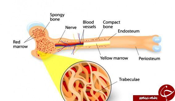 انواع پیوند مغز استخوان و شرایط اهدا کنندگان آن