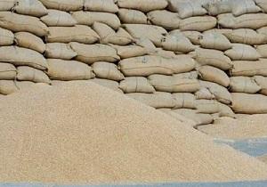 هزار و ۴۳۰ تن گندم قاچاق در پارس آباد کشف شد