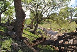 نابود کردن جنگلهای زاگرس به بهانه صید سنجاب + فیلم