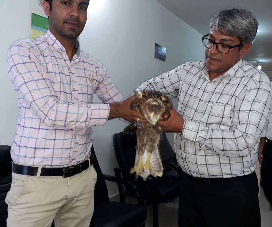 نجات یک بهله پرنده شکاری از مرگ توسط معلم دلسوز