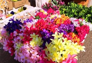 روز/صادرات گل ریشهای به عراق و ترکمنستان/  گل رز از ۱۰ تا ۱۵ هزار تومان است
