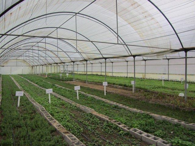 اختصاص ۵ هزار میلیارد تومان اعتبار به توسعه کشت گلخانه ها/ ۲ میلیون و ۸۰۰ هکتار باغ در کشور وجود دارد