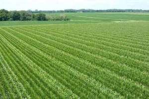طرح جالبی که سود کشاورزان را چندین برابر میکند! + فیلم