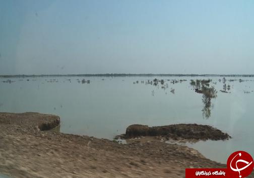 سیل، تن خشکیده تالاب بین المللی هورالعظیم را زنده کرد/رونق کشاورزی و دامپروری، هدیه سیل به ساکنان تالاب