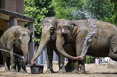 آبتنی فیلها در باغ وحش برلین