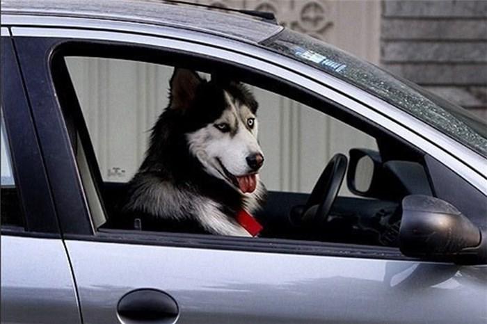 برخورد جدی پلیس البرز با سگگردانی