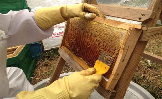 از پرورش و اصلاح نژاد موفق اسب در قم تا شیرینی کام زنبورداران با افزایش تولید عسل + فیلم