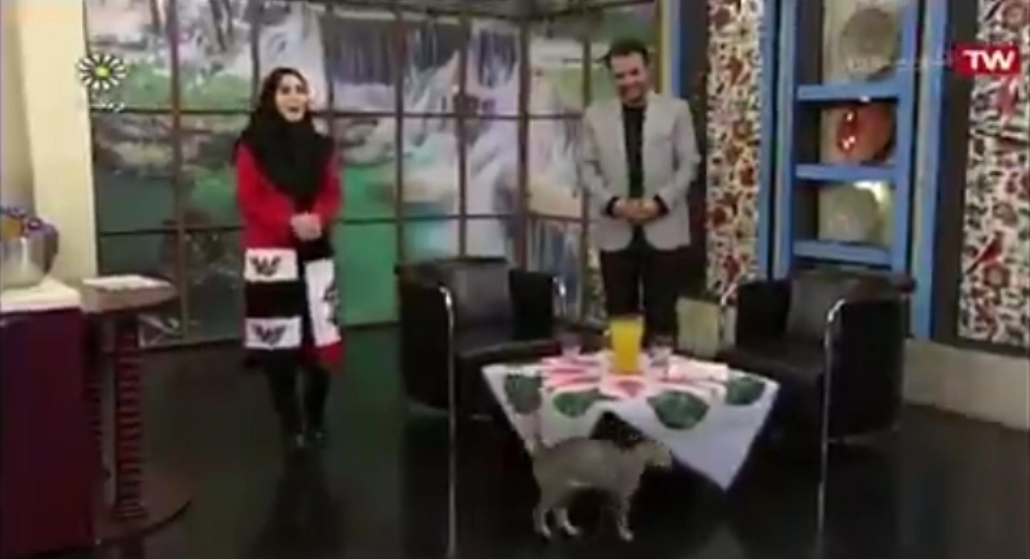 حضور یک گربه در پخش زنده برنامه تلویزیونی +فیلم