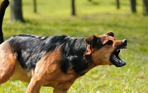 حیوان گزیدگی در گیلان افزایش یافت
