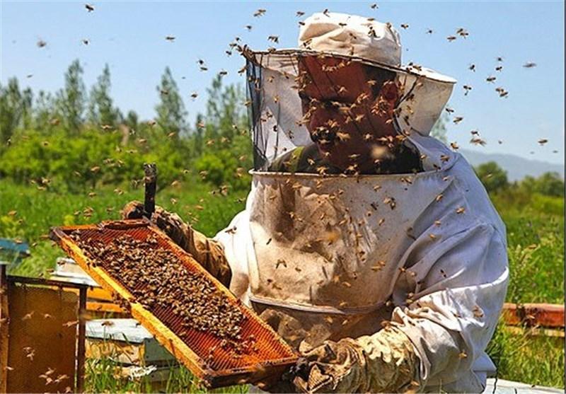 زنبورداران موظف به دریافت مجوز اسکان هستند